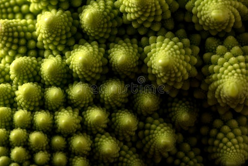 Ny makro för romanescokålgrönsak, selektiv fokus royaltyfria bilder