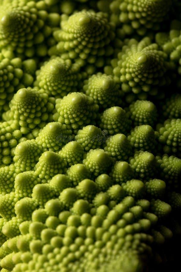 Ny makro för romanescokålgrönsak, selektiv fokus fotografering för bildbyråer