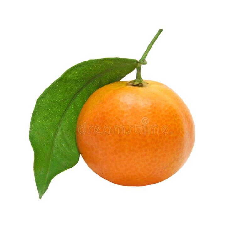 Ny mandarin med den grönt blad tagna closeupen isolerat arkivfoto