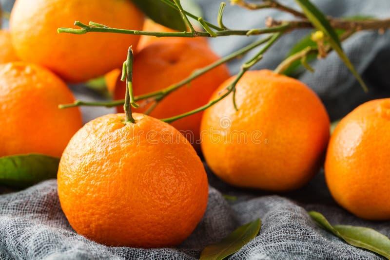 Ny mandarinfrukt med sidor royaltyfri foto