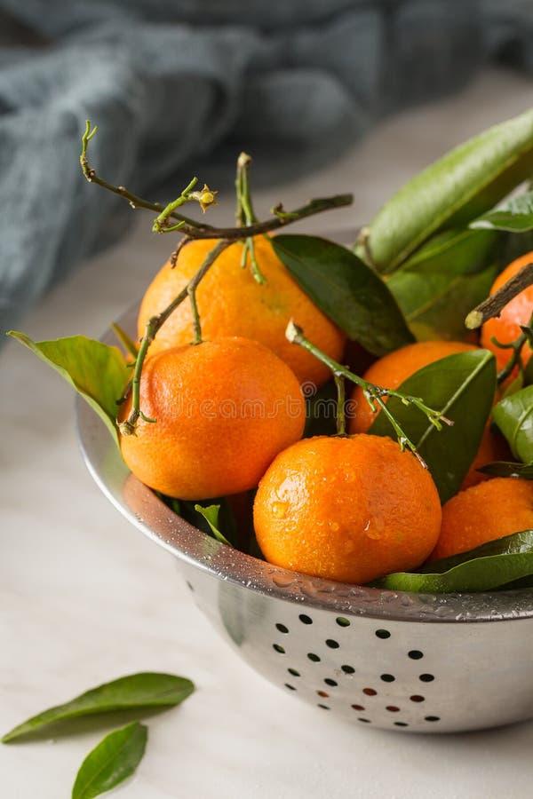 Ny mandarinfrukt med sidor royaltyfri bild