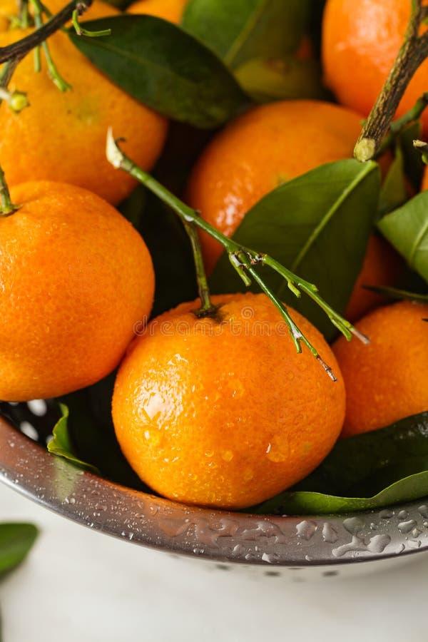 Ny mandarinfrukt med sidor royaltyfri fotografi