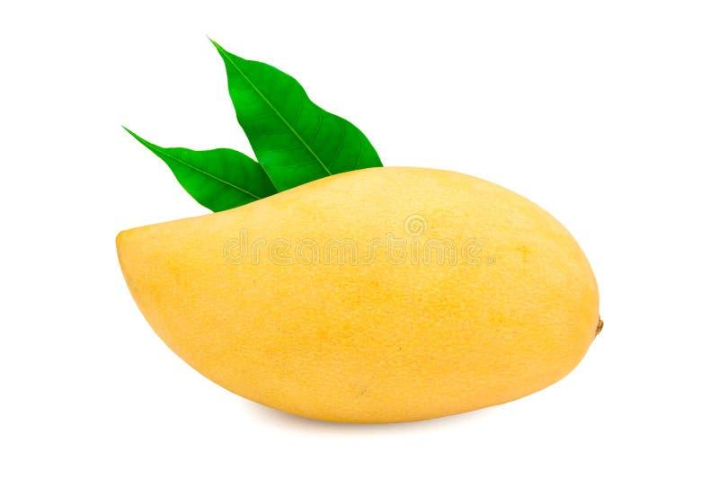Ny mango på vit royaltyfria foton