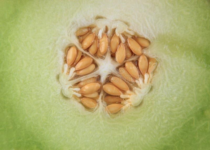 Download Ny melon för cantaloupe arkivfoto. Bild av orange, nutritious - 19790980