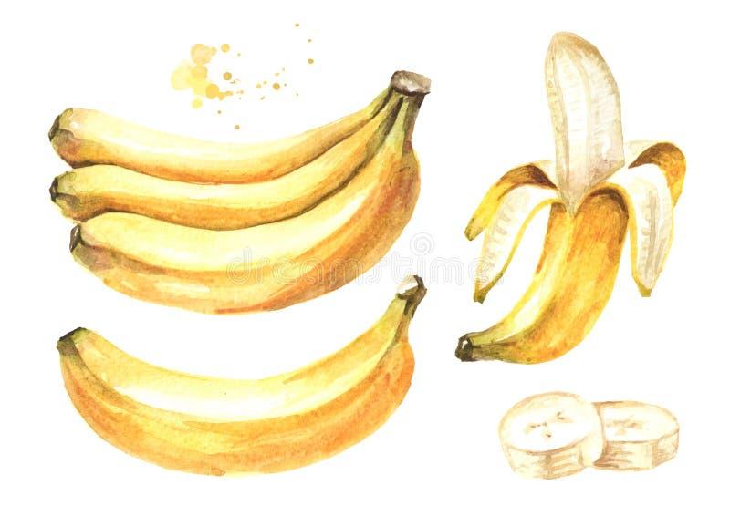 Ny mogen gul bananbest?ndsdelupps?ttning Dragen illustration f?r vattenf?rg som hand isoleras p? vit bakgrund royaltyfri illustrationer