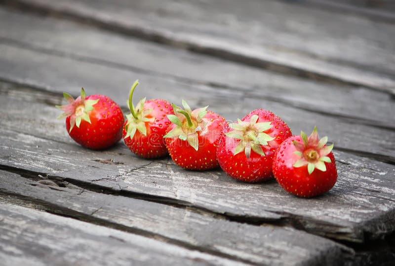 Download Ny mogen jordgubbe fotografering för bildbyråer. Bild av sunt - 78726359