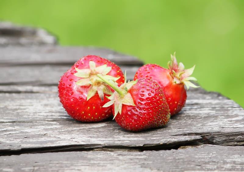 Download Ny mogen jordgubbe arkivfoto. Bild av clean, rött, säsongsbetonat - 78726444