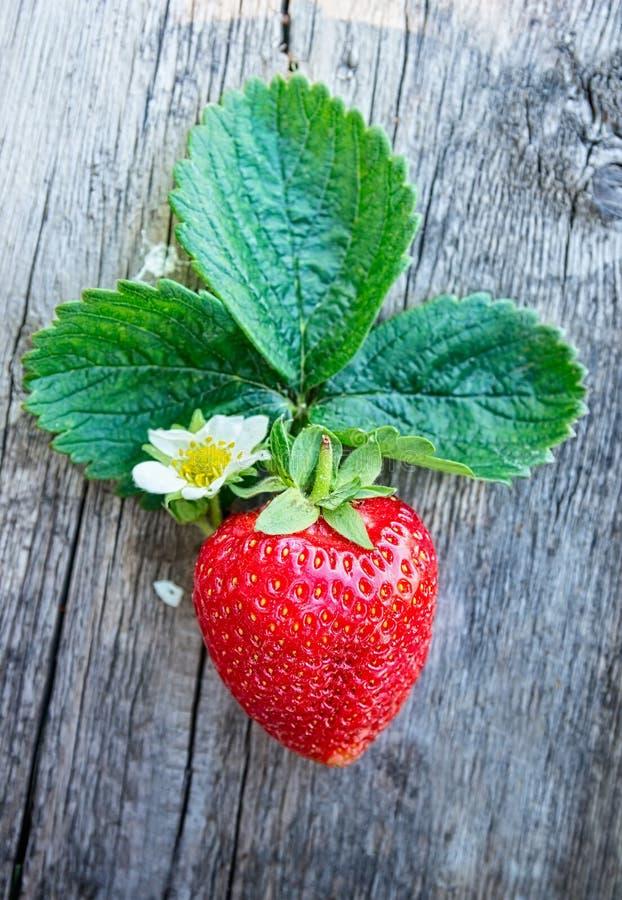 Ny mogen jordgubbe med blomman och sidor på mörk träbakgrund royaltyfri foto