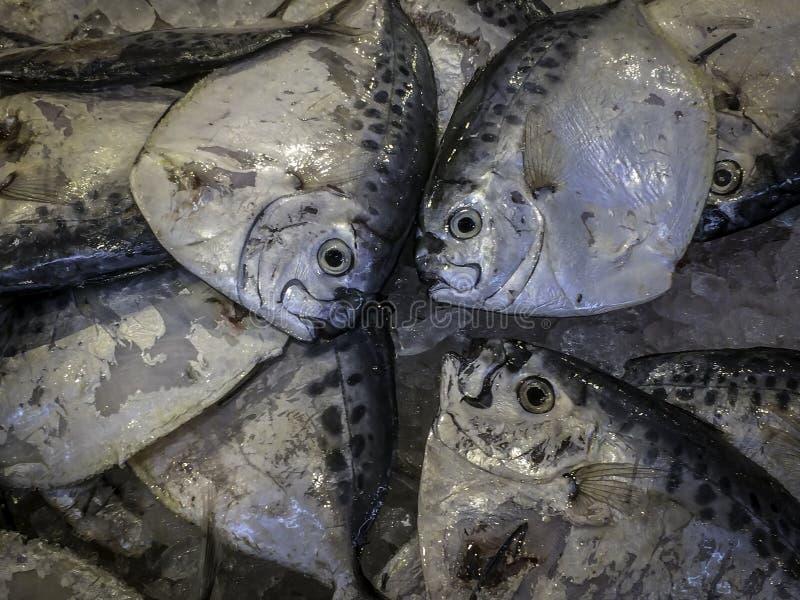 Ny Moonfish på is i asiatisk marknad arkivfoton