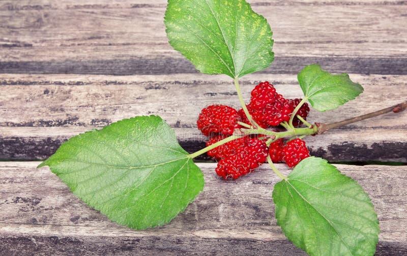 Ny mullbärsträdfrukt och gräsplan spricker ut på träbakgrund arkivbild