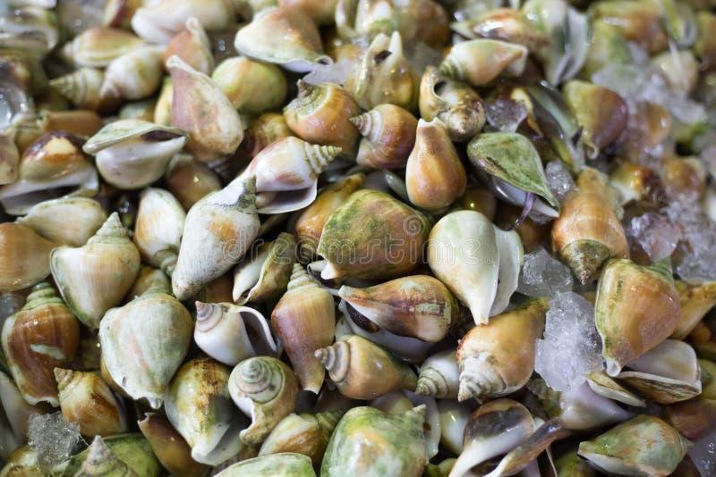 Ny musslaskaldjurskaldjur den nya marknaden royaltyfria foton
