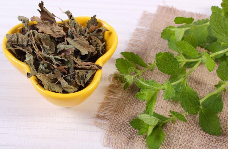 Ny och torkad citronbalsam i bunke på trätabellen, herbalism royaltyfria foton