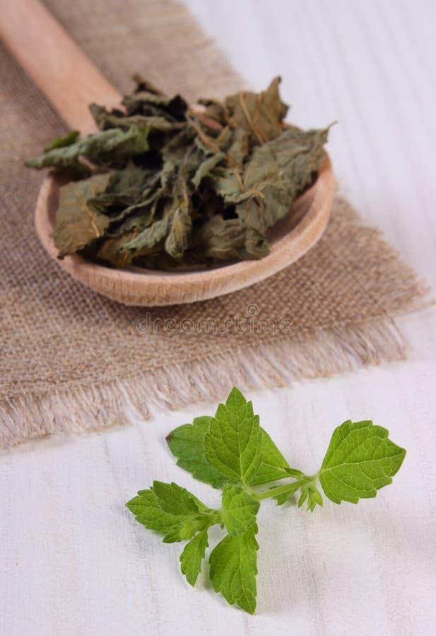 Ny och torkad citronbalsam med skeden på den vita trätabellen, herbalism arkivfoto
