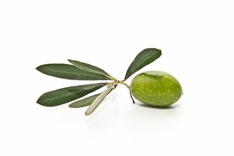 ny olivgrön royaltyfri bild
