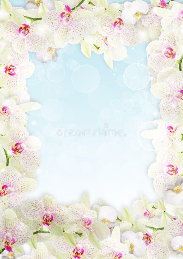ny orchid för kant royaltyfri illustrationer