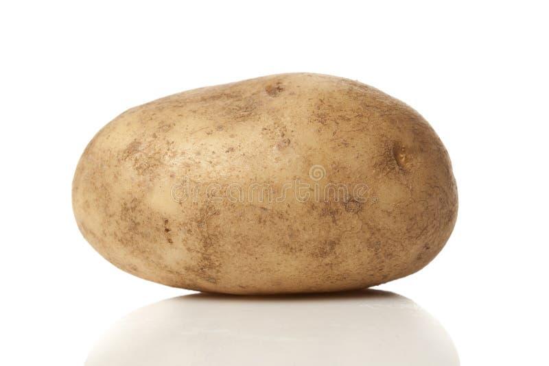 Ny organisk hel potatis arkivbild