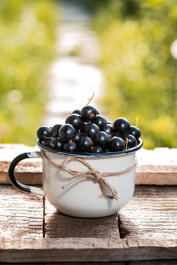 Ny organisk svart vinbär i en råna royaltyfria bilder