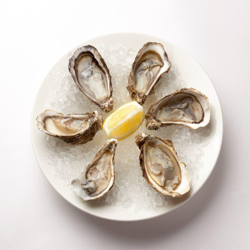 Ny ostron i bunken med is royaltyfri foto