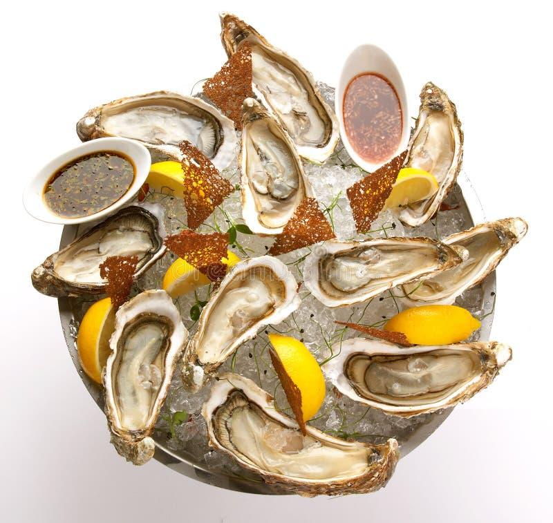 Ny ostron i bunken med is royaltyfria foton