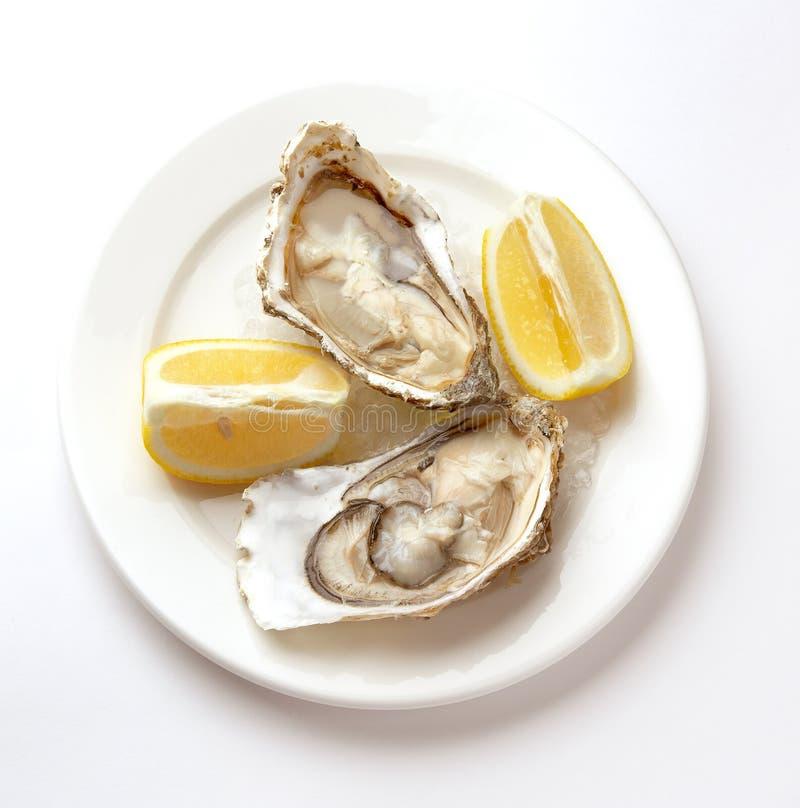 Ny ostron i bunken med is arkivbild