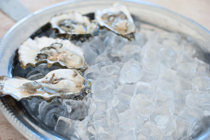 Ny ostronlögn på ett ismagasin royaltyfri fotografi
