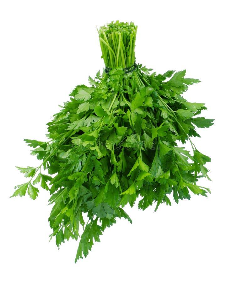 ny parsley royaltyfria bilder