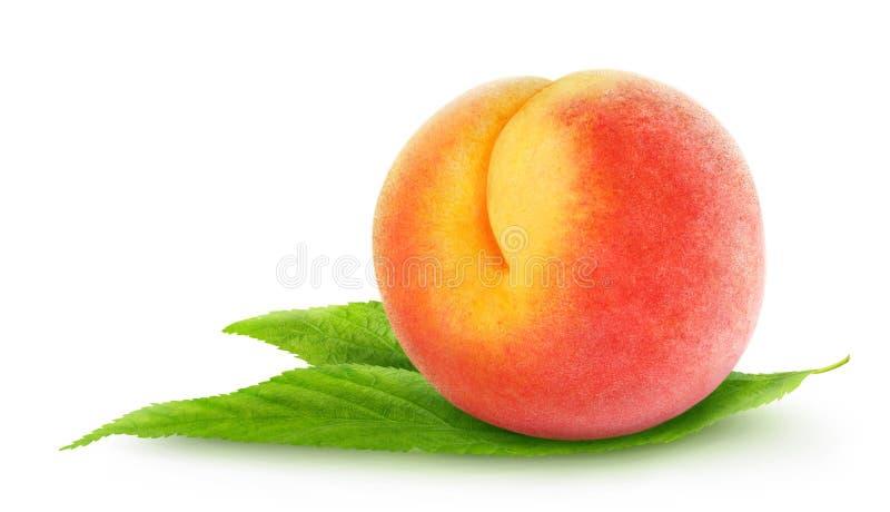 ny persika arkivbilder