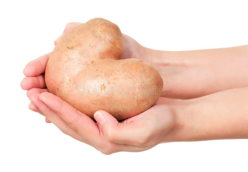 Ny potatis royaltyfri bild