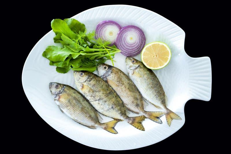 Ny prickig spinefootfisk med raketsidor som tjänas som på den vita plattan royaltyfri bild