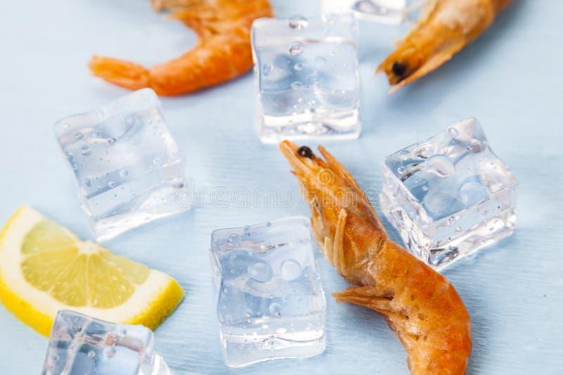 Ny räka med citronen på is fotografering för bildbyråer