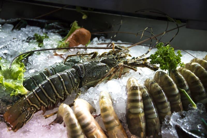 Ny räka och hummer som ligger på isen royaltyfri foto