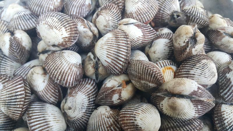 Ny rå havsbubblabakgrund, havsskal, favorit- maträtt av skaldjur royaltyfri bild