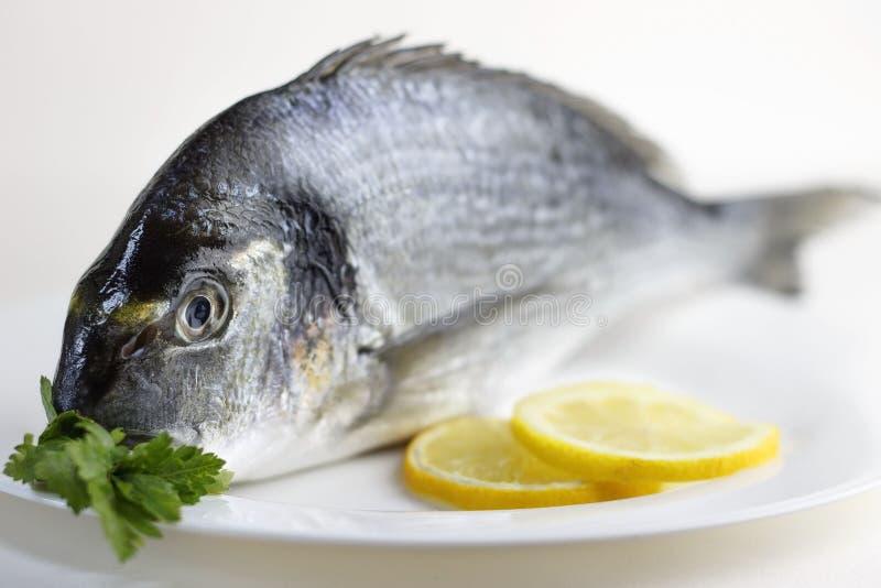Ny, rå okokt hel doradofisk eller havsbraxen royaltyfri bild