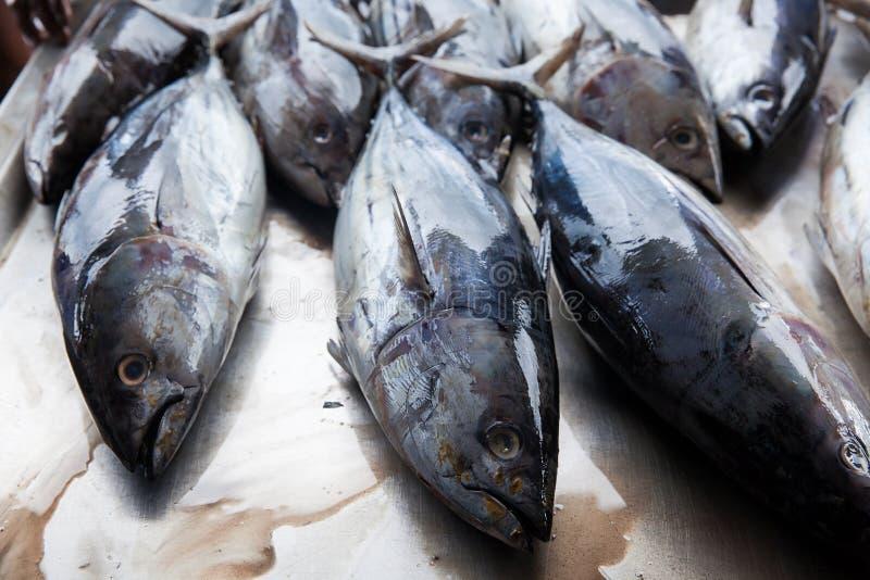 Ny rå tonfiskfisk i marknad royaltyfri foto