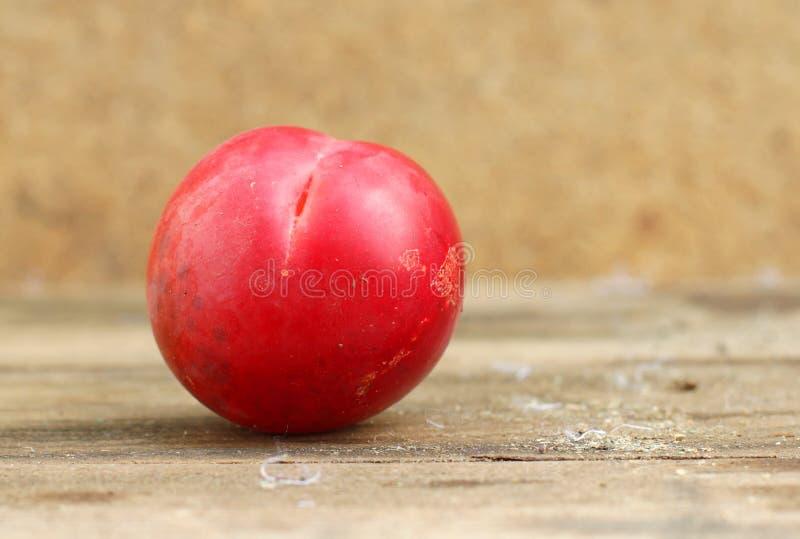 Ny röd plommon arkivbild