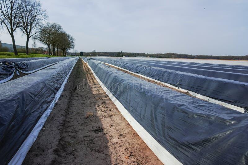 Ny säsong på vita sparrisfält i Tyskland, nederländsk cov arkivbild