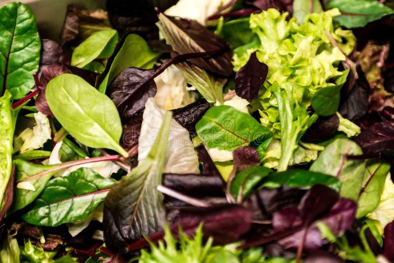 Ny sallad med blandad gräsplangrönsallatarugula, mesclun, för matgräsplan för mache nära övre sunt mål arkivfoton