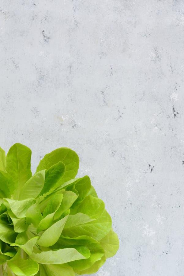Ny salladgrönsak från hydrophinic kultur Salladväxt, hydroponic grönsaksidor Säsongsbetonade grönsaker arkivbild