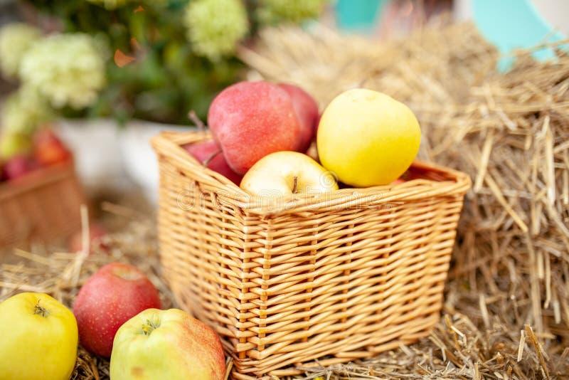 Ny skörd av äpplen Naturtema med röda druvor och korgen på sugrörbakgrund Naturfruktbegrepp royaltyfri fotografi