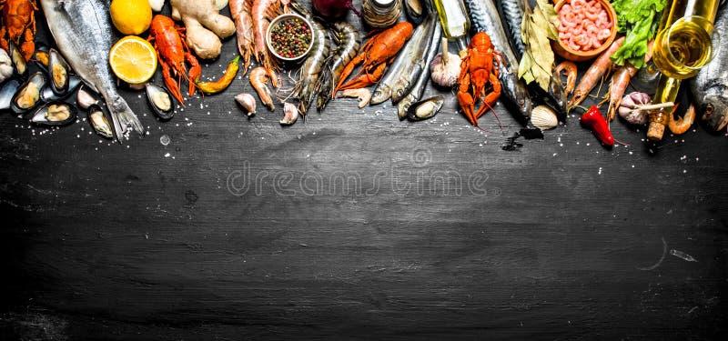 ny skaldjur arkivbilder
