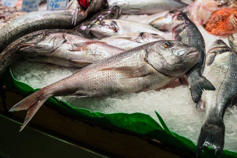 Ny skaldjur på isdorada arkivfoton