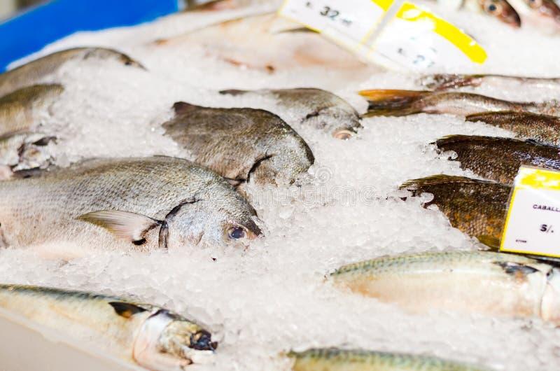 Ny skaldjur p? is p? fiskmarknaden arkivfoton