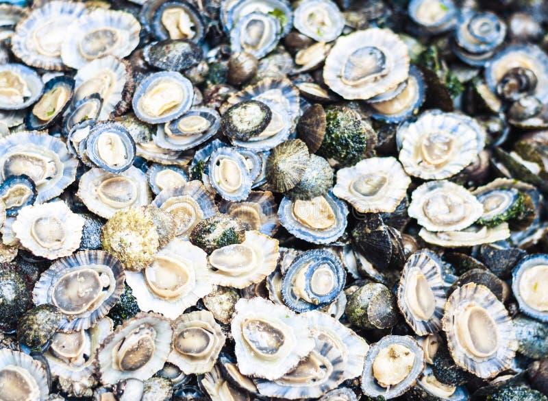 Ny skaldjur som är till salu i fiskmarknaden Pescheria av Catania, Sicilien, Italien arkivfoton