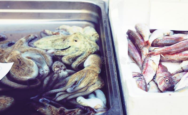 Ny skaldjur som ?r till salu i fiskmarknaden Pescheria av Catania, Sicilien, Italien fotografering för bildbyråer