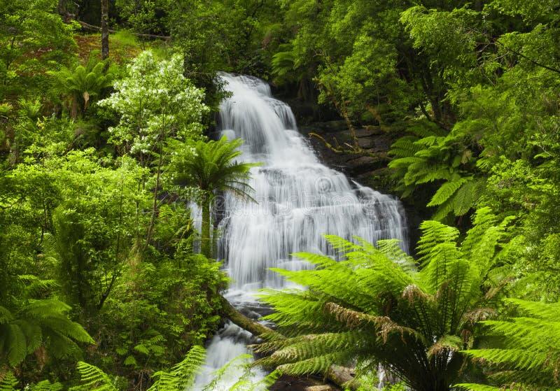 Ny skog royaltyfria bilder