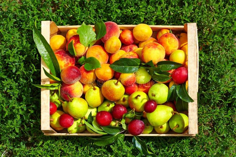 Ny sommarfrukt i spjällåda på gräs arkivbild