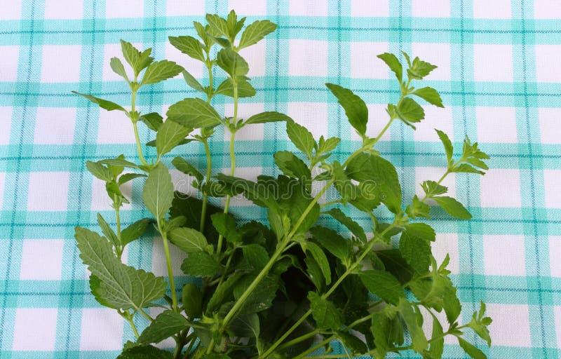 Ny sund citronbalsam på den rutiga bordduken, herbalism arkivbilder
