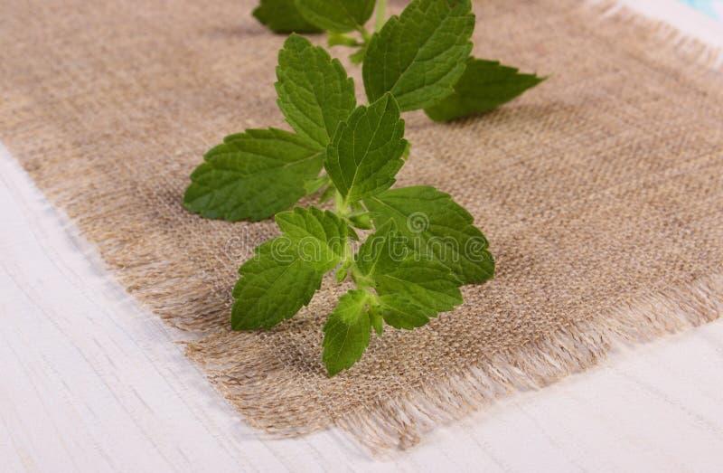 Ny sund citronbalsam på den vita trätabellen, herbalism royaltyfria foton