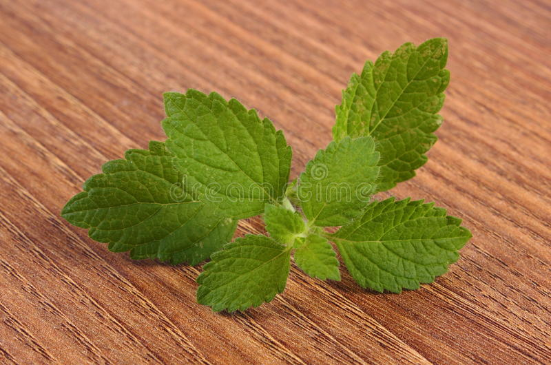 Ny sund citronbalsam på trätabellen, herbalism arkivfoton