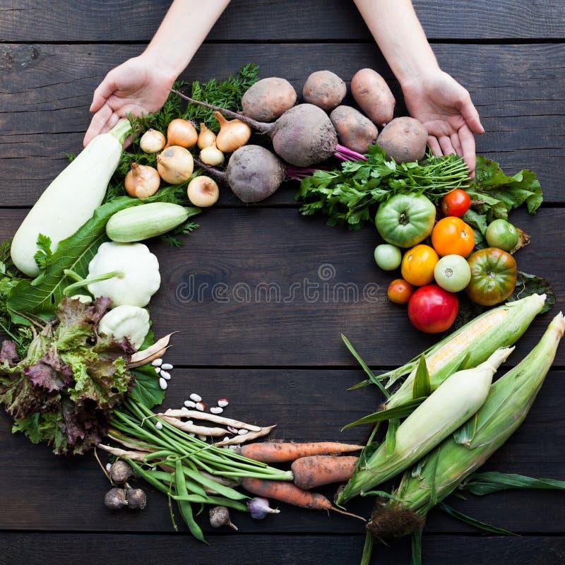 Ny sund mat, detoxificationväxt Organisk detoxskörd royaltyfri fotografi